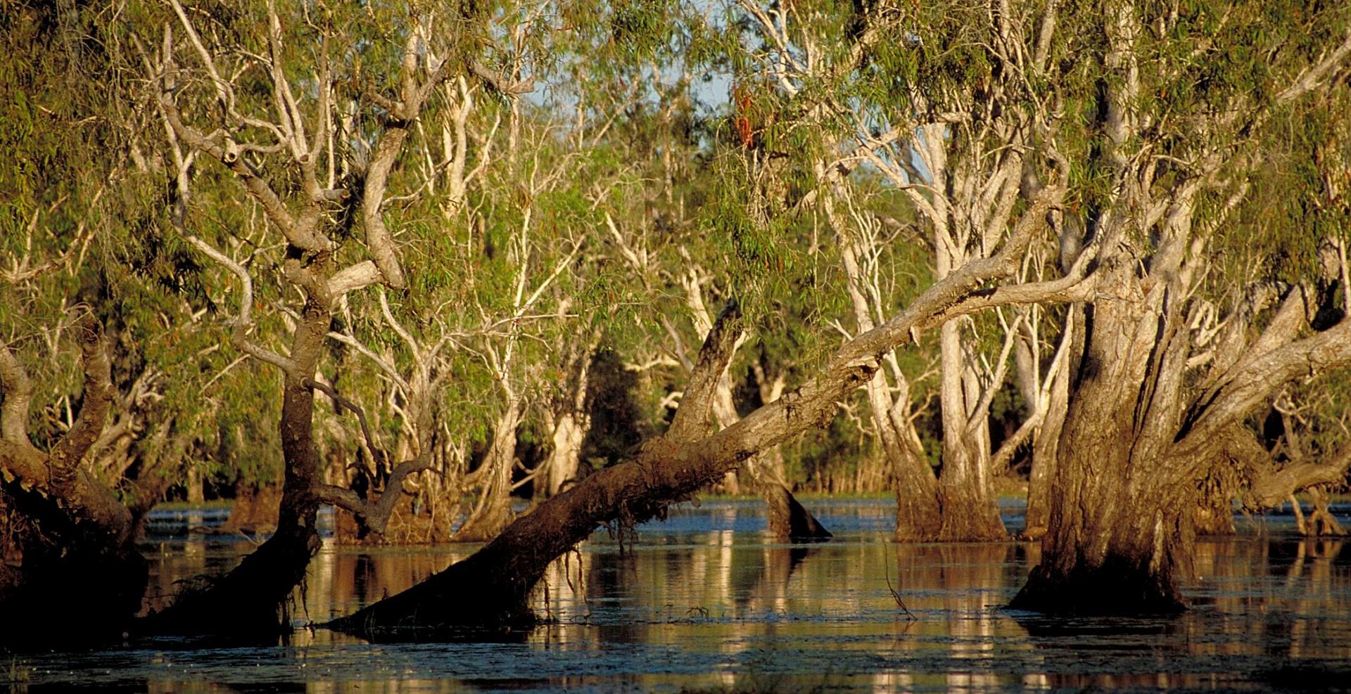 Reportage-Fotograf-in-Paris-Reportage-Fotografie-Mangroven-Wälder-in-Australien